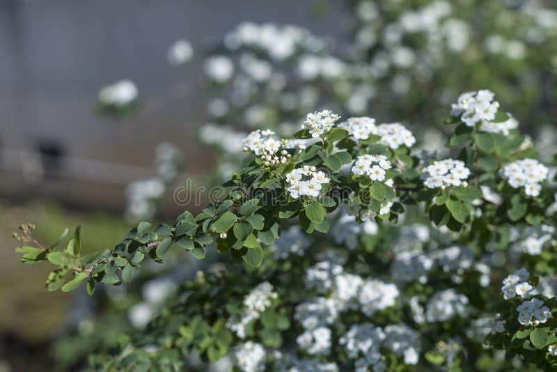 Weiße Blumen in einem botanischen Garten 2 lizenzfreies stockbild