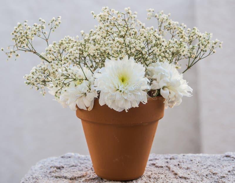 Weiße Blumen im Topf stockbild. Bild von frühling, weiß - 43888673
