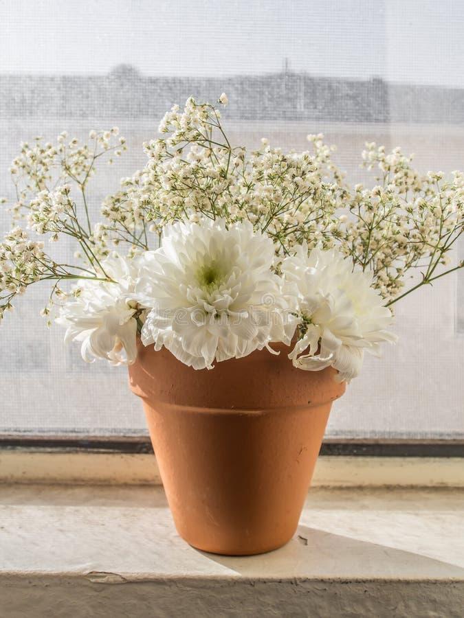 Weiße Blumen im Topf stockfoto. Bild von jahreszeit, orange - 43888816