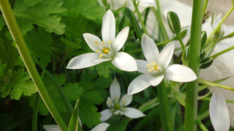 Weiße Blumen klein stockfotos