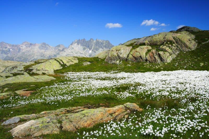 Weiße Blumen und Berge stockfotografie