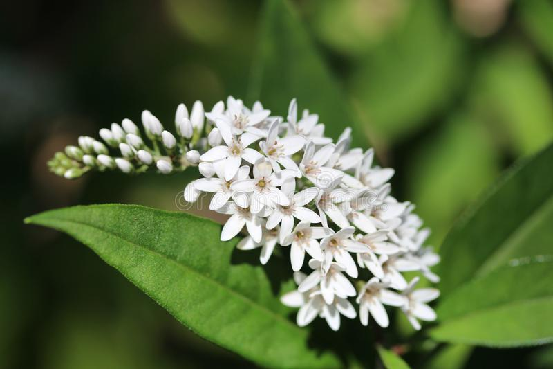 Weiße Blumen und Grün stockfotografie
