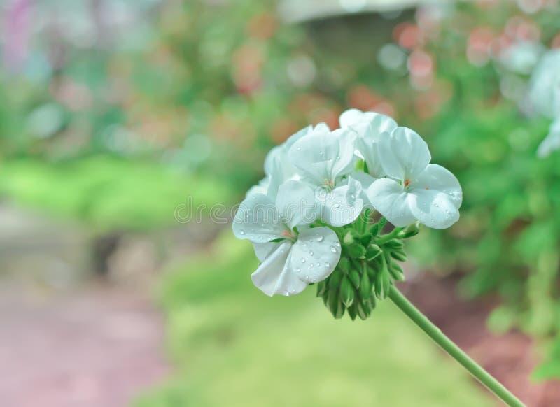 Weiße Blumen und reizendes bokeh lizenzfreie stockfotos