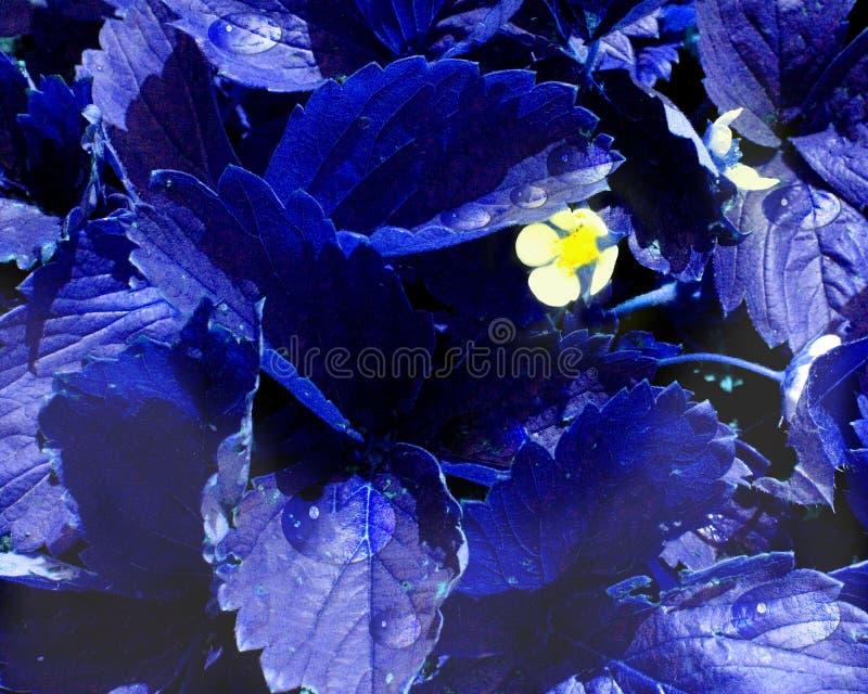 Weiße Blumen verbreiteten wegen der blauen Blätter lizenzfreies stockbild