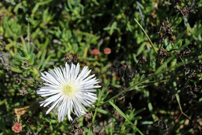 Weiße Blumenblätter lizenzfreies stockbild