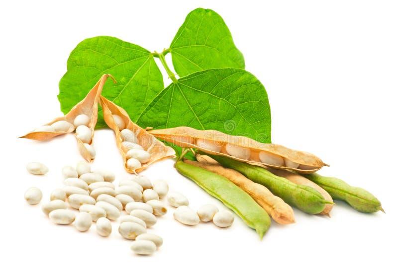 Weiße Bohnen mit Blättern lizenzfreie stockfotos