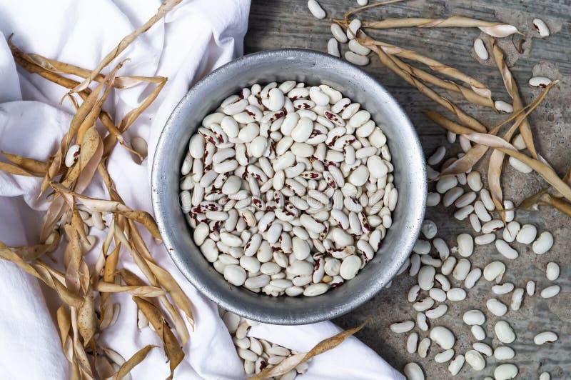 Weiße Bohnen mit roten Stellen gießt aus Metallplatte auf einem grauen Hintergrund heraus Bohnen werden, Hülsen der trockenen Boh lizenzfreie stockbilder