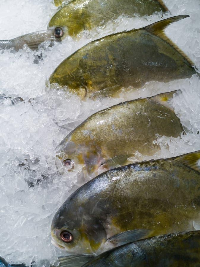 Weiße Butterfische oder silberne Butterfischfische auf Eis stockfoto