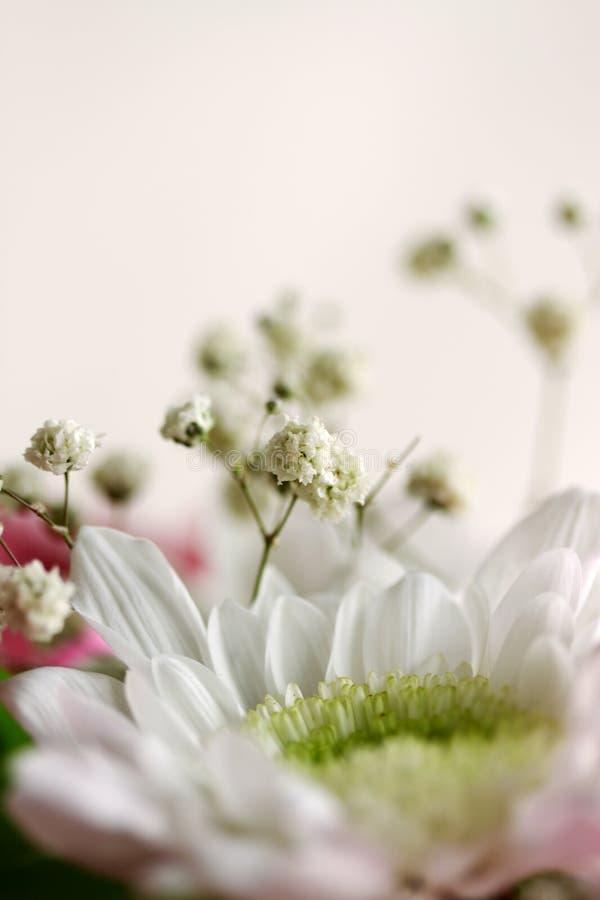 Download Weiße Chrysantheme stockbild. Bild von hintergrund, georgina - 27727753