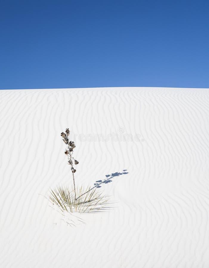 Weiße Sande stockbilder