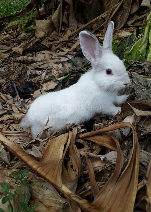 Weiße Farbe des Tierkaninchens nett stockfoto