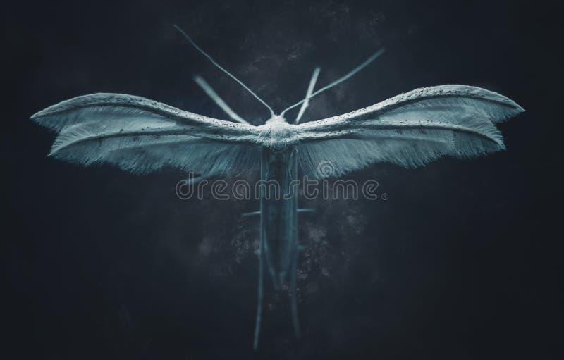 Weiße Federmotte in der Dunkelheit lizenzfreies stockbild