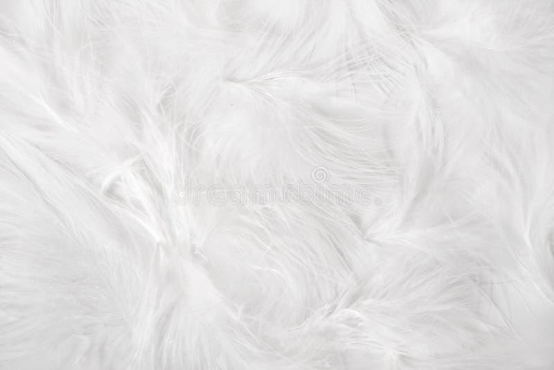 Weiße Federn lizenzfreie stockbilder