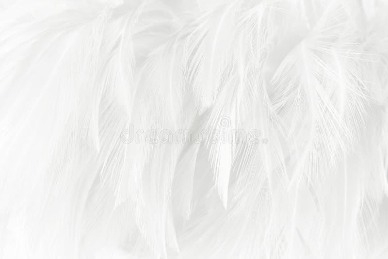 Weiße Federn masern für Hintergrund stockfotos
