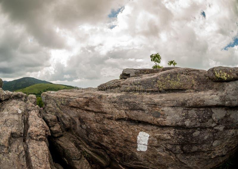 Weiße Flamme auf Felsen bei Jane Bald Overlook stockbilder