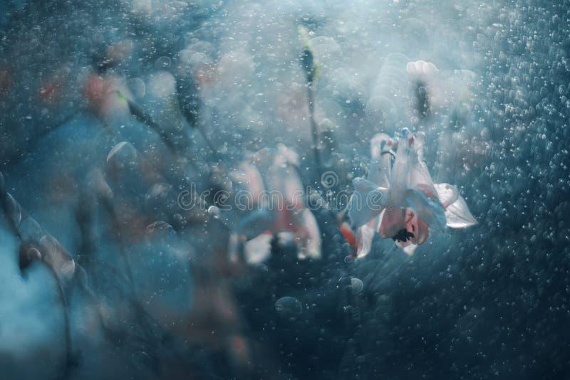 Weiße Glockenblumen in den Tropfen des blauen Wassers stockfotografie