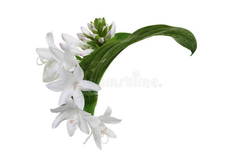 Weiße Hosta-Blume stockbild. Bild von ideen, blumen, ecke - 46407743