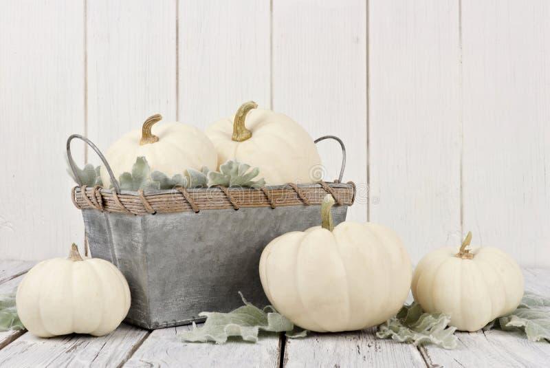 Weiße Kürbise und Dekor des Herbstes auf weißem Holz stockbilder