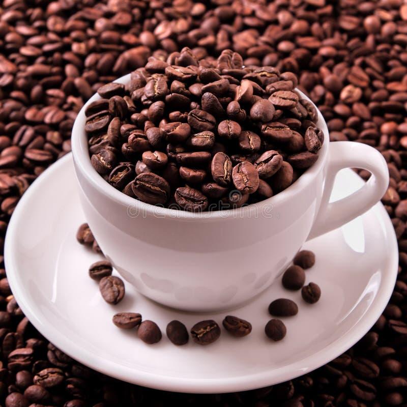 Weiße Kaffeetasse gefüllt mit gebratenen Bohnen nah herauf quadratisches Format stockbilder