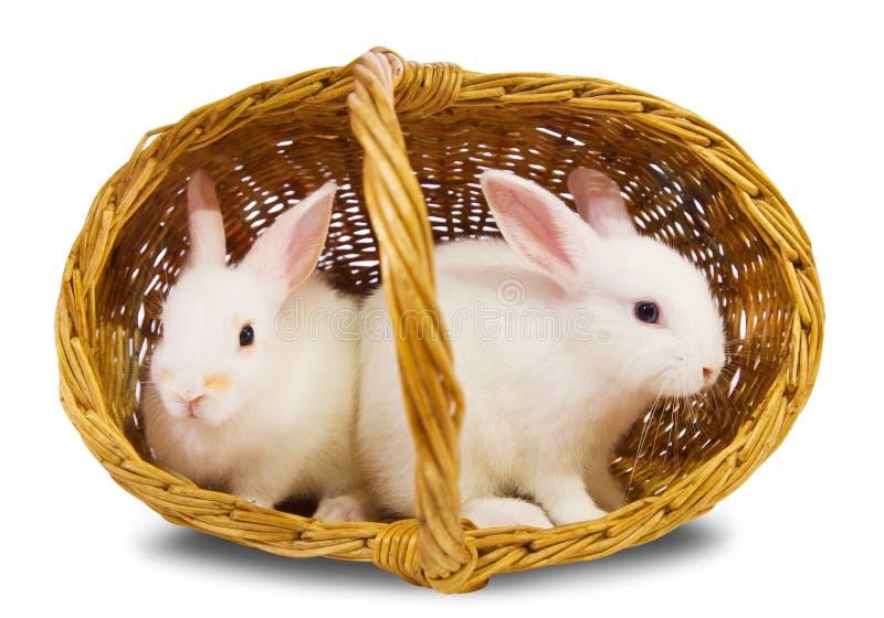 Weiße Kaninchen im Korb stockfoto