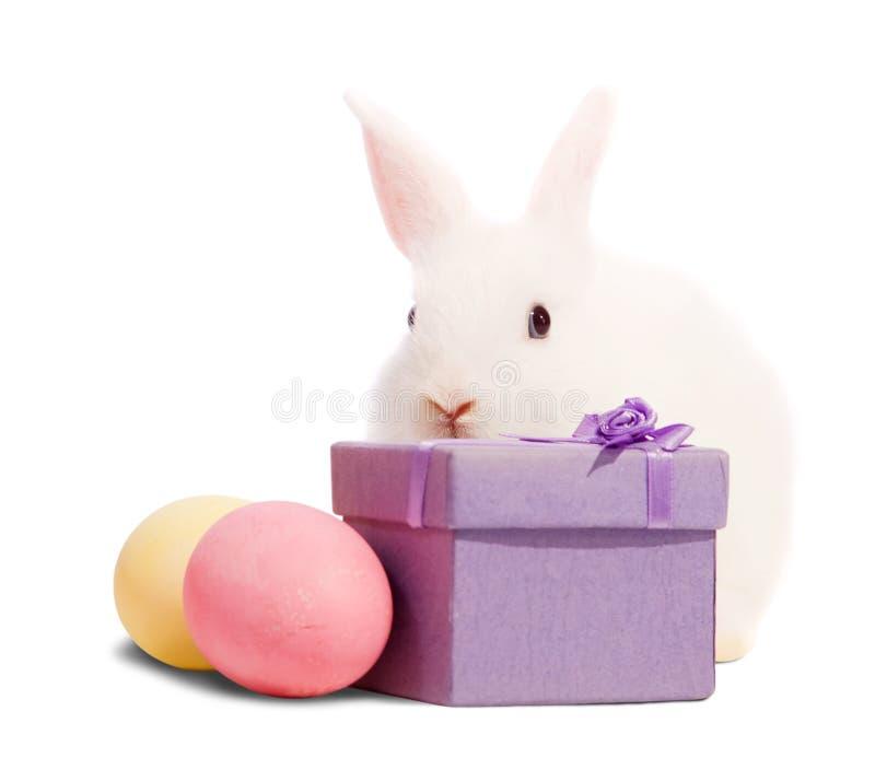 Weiße Kaninchen mit anwesendem Kasten lizenzfreie stockfotografie