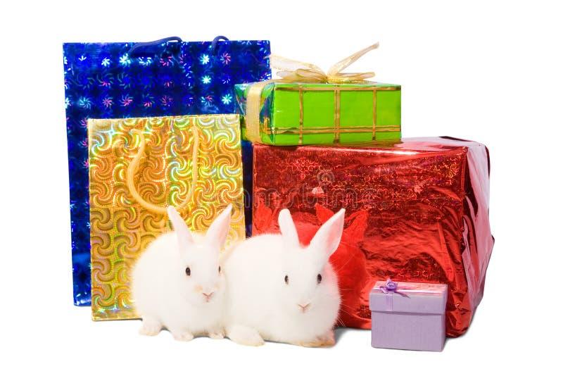 Weiße Kaninchen mit Geschenken stockfoto