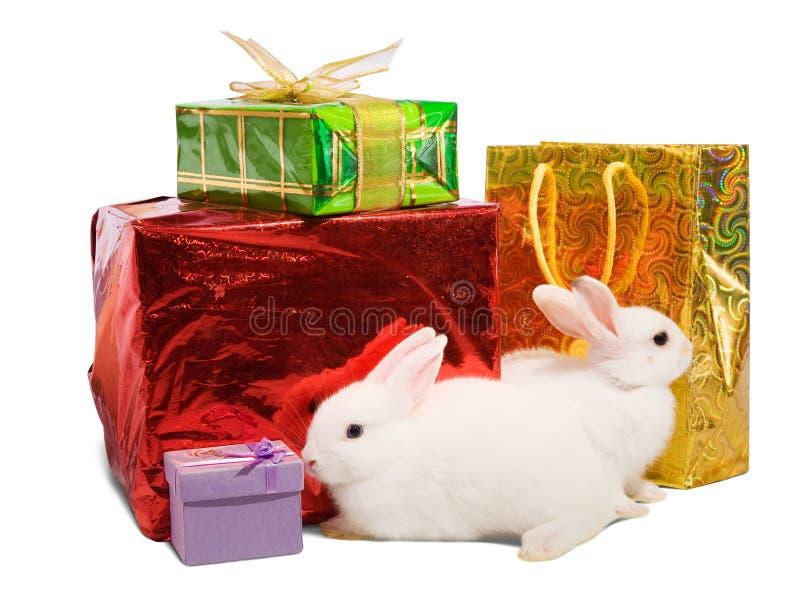 Weiße Kaninchen mit Geschenken lizenzfreie stockbilder