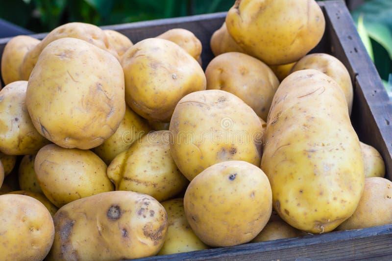 Weiße Kartoffeln der neuen Ernte am Markt lizenzfreie stockfotografie