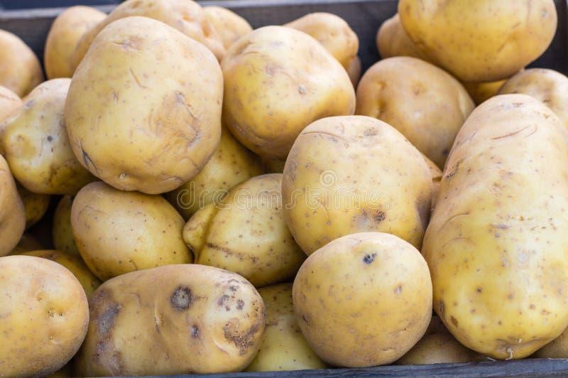 Weiße Kartoffeln der neuen Ernte am Markt stockbilder