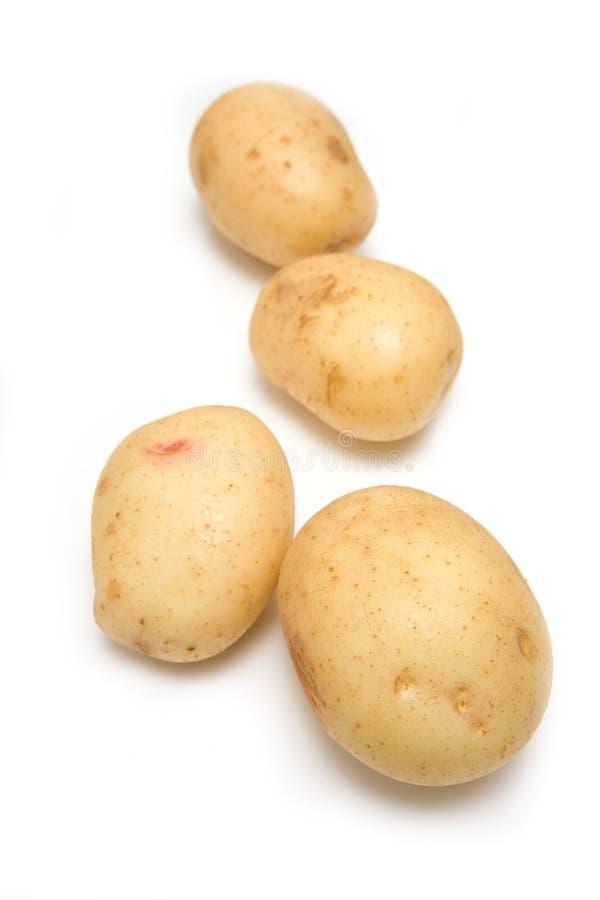 Weiße Kartoffeln getrennt. stockbild