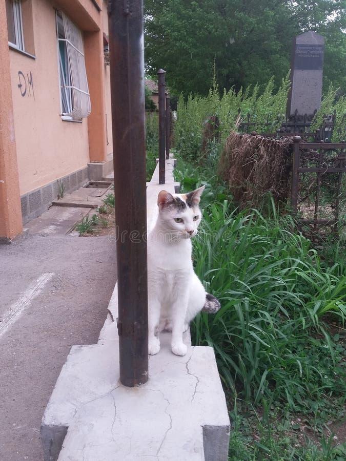 Weiße Katze lizenzfreies stockfoto