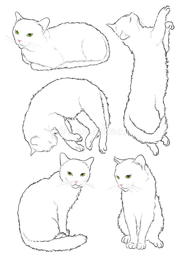 Weiße Katze stock abbildung