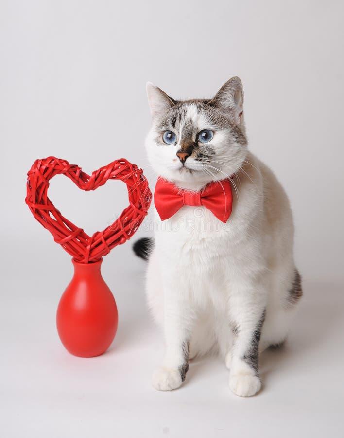Weiße Katze in der roten Fliege mit Valentinsgrußherzen stockbilder