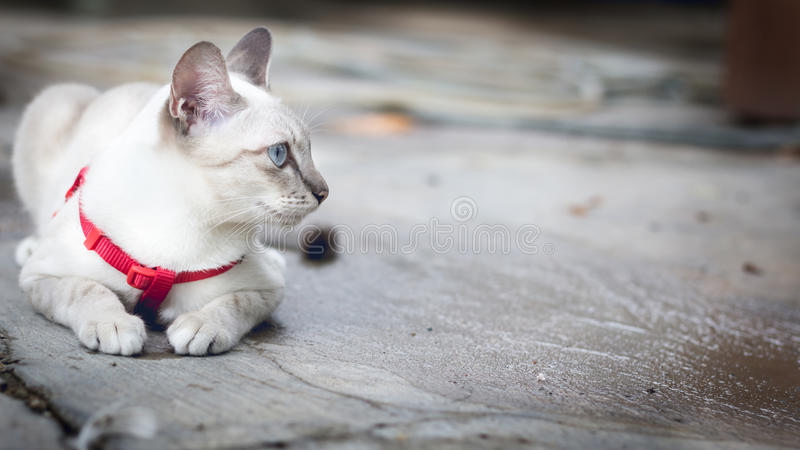 Weiße Katze, die draußen auf dem Boden und dem Blick hockt stockbilder