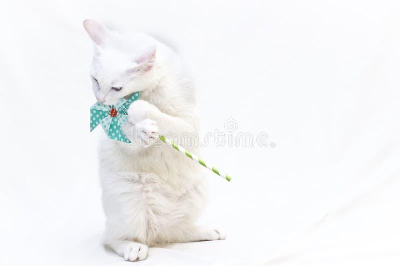 weiße Katze, die ein Feuerrad hält lizenzfreie stockfotos