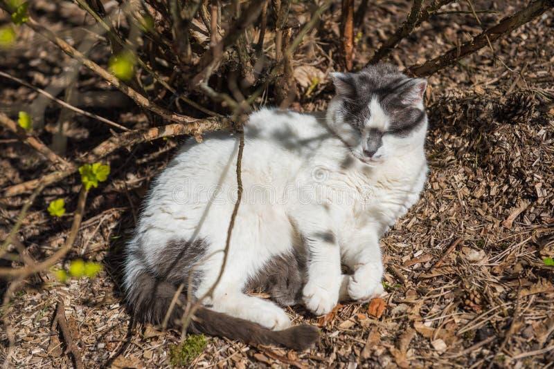 Weiße Katze, die im Frühjahr aus den Grund liegt und im Sun sich aalt lizenzfreie stockfotos