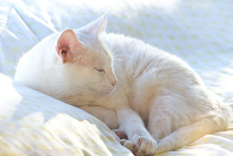 Weiße Katze, die in Sun schläft stockfoto