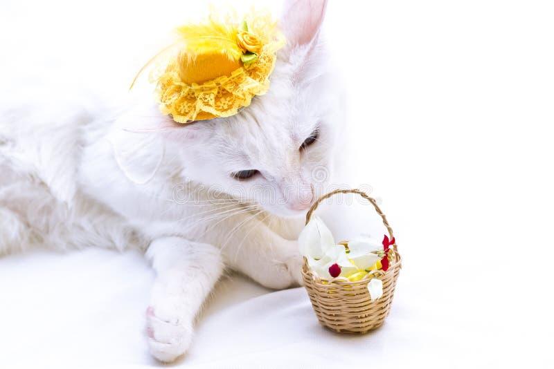 Weiße Katze mit dem gelben Hut, der einen Korb von Blumen auf weißem Hintergrund riecht stockfotografie
