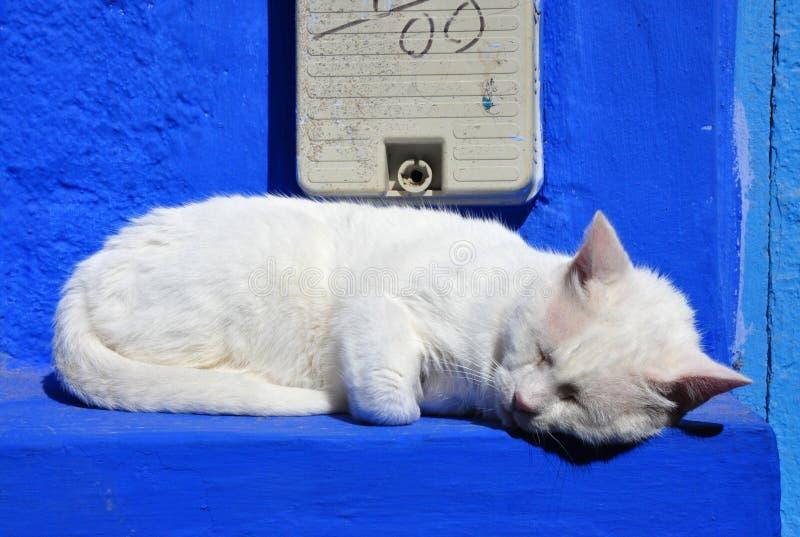 Weiße Katze Schlafens auf blauer Wand stockfotografie