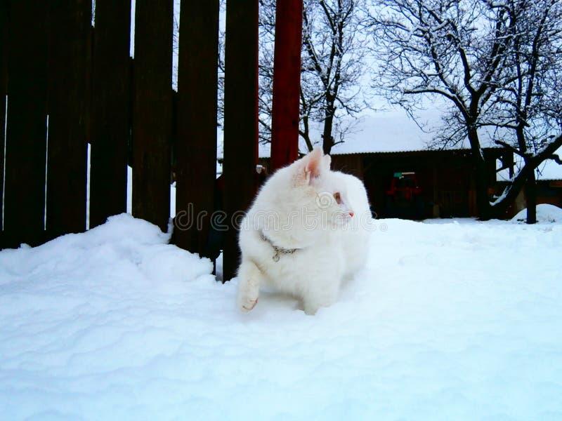 Weiße Katze und eine Winterzeit stockfoto