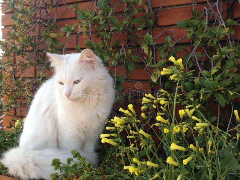 Weiße Katze und gelbe Blumen stockbilder