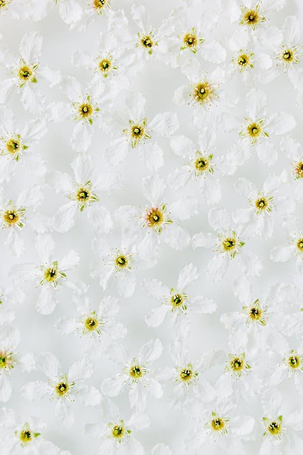 Weiße Kleine Blumen Auf Dem Wasser Oberseite Gelbe Blumen ...