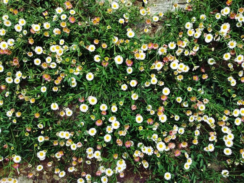 weiße kleine schöne Blumen in der Hochzeit lizenzfreies stockbild