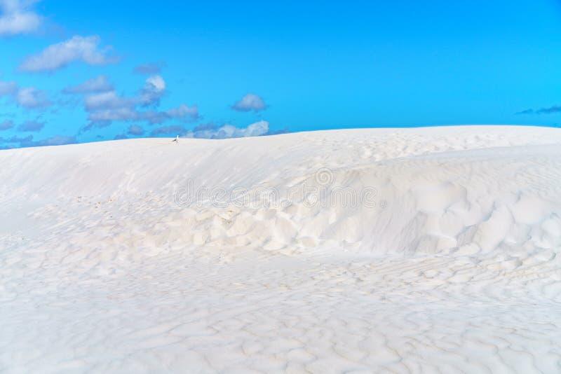Weiße lancelin Sanddünen, West-Australien 3 lizenzfreie stockbilder