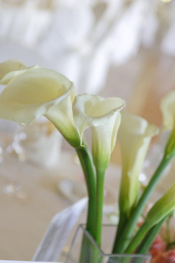 Weiße Lilien lizenzfreies stockfoto