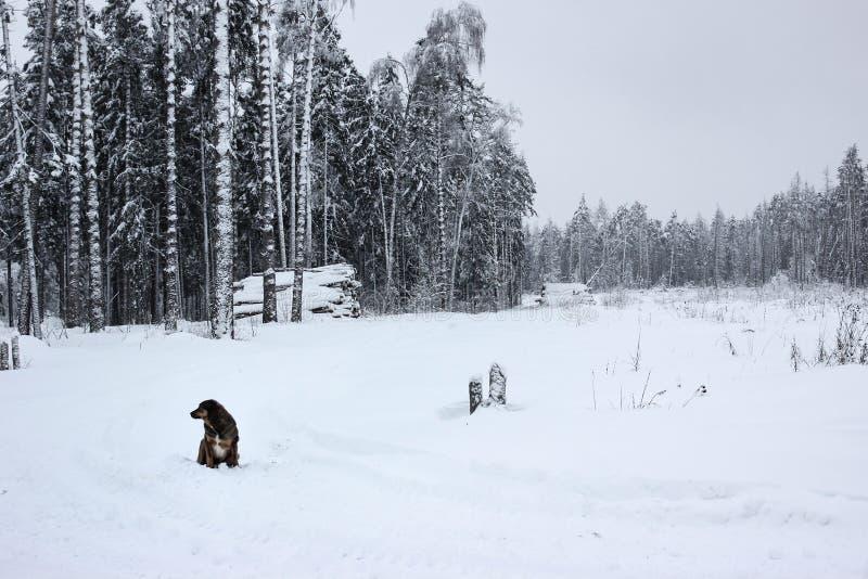 Weiße Märchen - Winter Forest Landscape und Hund lizenzfreies stockbild