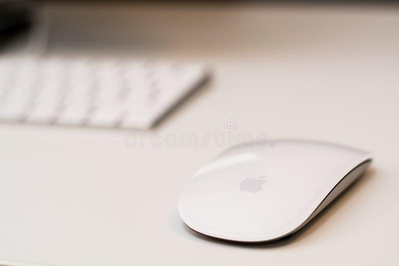Weiße Maus Apples mit unscharfer Tastatur im Hintergrund stockfotos