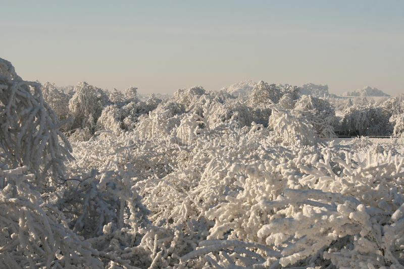 Weiße Natur im weißen Winter stockbild