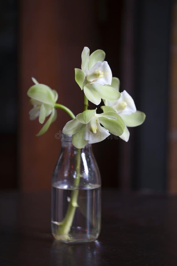 Weiße Orchidee mit einem grünlichen Farbton in einer Glasflasche auf einem Rotweinhintergrund stockfotografie