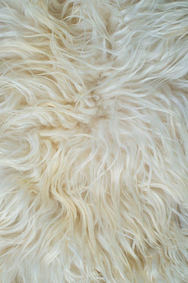 Weiße Pelzbeschaffenheit lizenzfreies stockbild